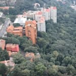 Autoridades avalan tala de árboles en Álvaro Obregón para construir condominio de