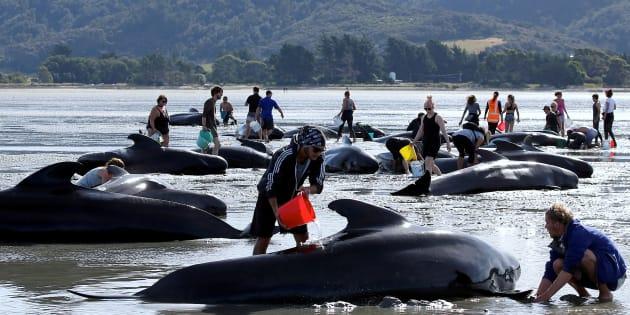 Representantes de 80 países se reuniram nesta quarta-feira (13) em Florianópolis para decidir o futuro das baleias.