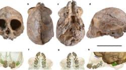 Un crâne de primate de 13 millions d'années