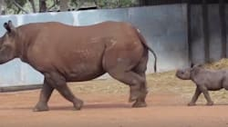 NSW Zoo 'Super Excited' About Birth Of Black