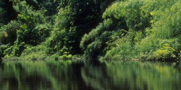 Criada em 1984, a Renca engloba áreas protegidas, parques, florestas estaduais, além de territórios indígenas.