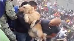 Hundreds Cheer As Dog Is Found Alive In Rubble After Mexico
