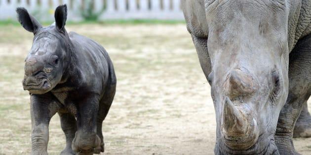 En Ardèche, l'incendie du zoo de Peaugres revendiqué sur un site anarchiste
