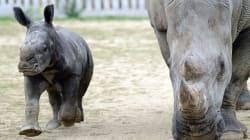 L'incendie du zoo de Peaugres en Ardèche revendiqué sur un site