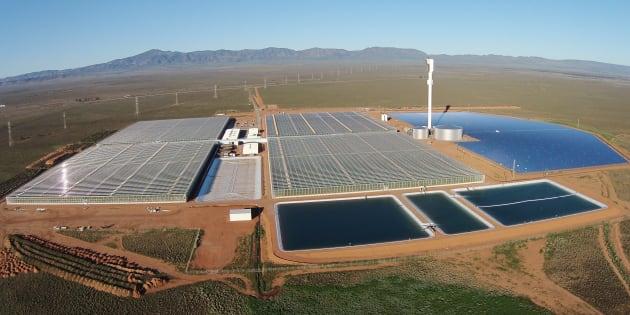 La ferme solaire de Sundrop Farms en Australie.