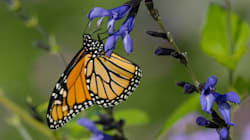 Butterflyways Blooming Throughout The