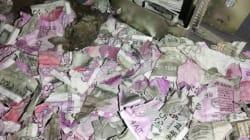 Ces rats ont grignoté 15.000 euros dans un distributeur de billets avant de mourir à