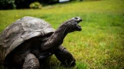 L'animale più vecchio del mondo è probabilmente gay e potrebbe aiutare a legalizzare i matrimoni omosessuali nel suo