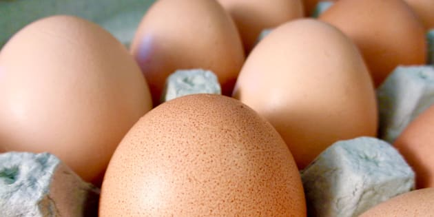 Organic brown eggs in egg carton