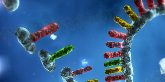 DNA assembly. Computer artwork showing nucleic acid bases (upper left) binding together to form a double-helix of DNA (deoxyribonucleic acid, lower right). This process occurs naturally in cells as DNA replication, which is needed in order to pass genetic information to offspring. The mechanisms that control DNA formation are exploited in genetic engineering. Here, the sequence assembly involves aligning and merging many fragments of a much longer DNA sequence in order to reconstruct the original sequence.