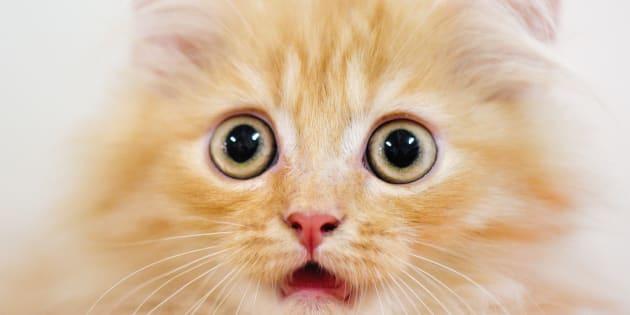 Un manuel scolaire indien propose aux élèves d'asphyxier un petit chat pour une expérience scientifique.