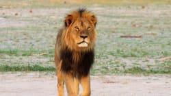 Le fils de Cecil le lion tué dans une partie de chasse au