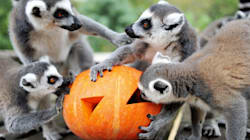 World Lemur Day: How Lemurs Spent The Day Dedicated Just To