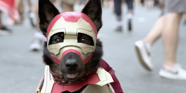 サンディエゴ・コミコンにてコスプレする犬。19日撮影