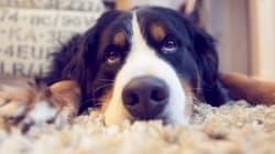 10 raisons de ne pas offrir d'animaux comme cadeau de
