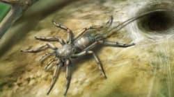 Aranha com rabo tem 100 milhões de anos e é pior do que poderíamos