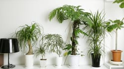 How To Keep Your Houseplants Healthy (It Starts Before You