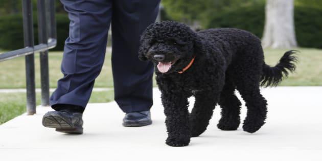 Sunny la chienne de la famille Obama