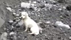 Ce chien triste recherchant son maître après l'éboulement a ému en