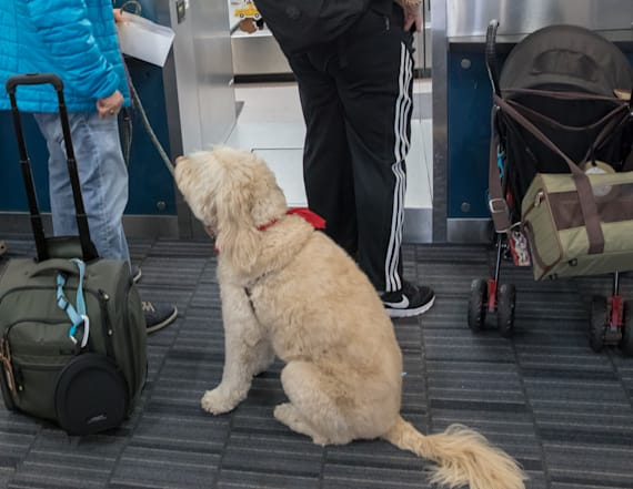 Southwest cracks down on emotional support animals