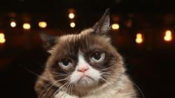 «Grumpy Cat» obtient 710 000 $ en