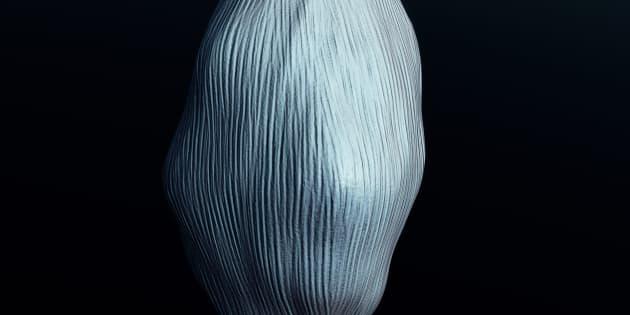 human knee muscle
