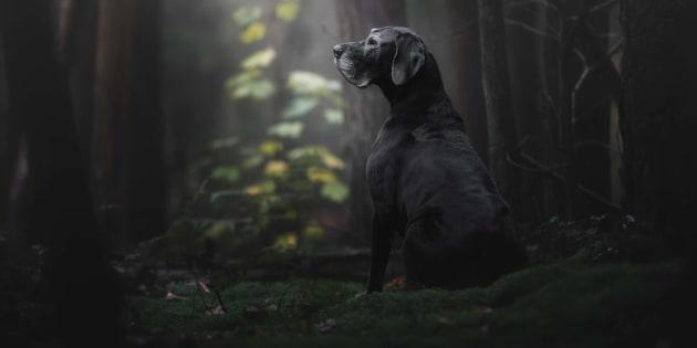 La gran danés Noe es la musa que inspiró la fotografía ganadora de este año.