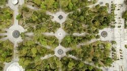 Lo que los árboles urbanos hacen por nuestra