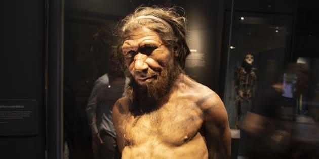 Des chercheurs vont créer des mini-cerveaux avec de l'ADN de Néandertal