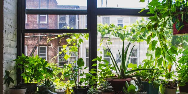 10 plantas que vão melhorar a qualidade do ar na sua casa