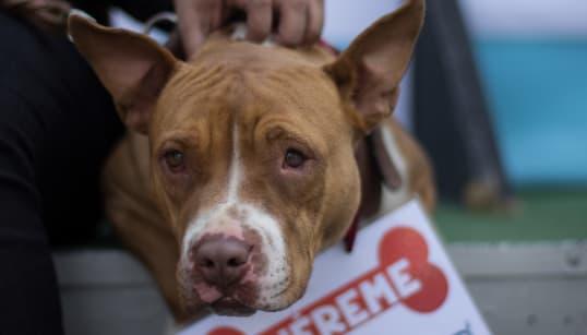 El maravilloso rescate de 32 perros en CDMX: del ring al nuevo