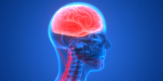 O que acontece com o seu cérebro - em andrekummer.com.br