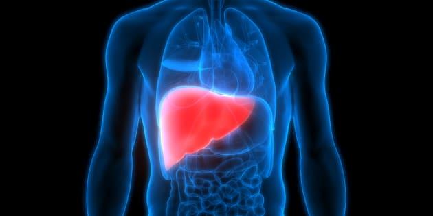 Emplacement du foie dans le corps humain.