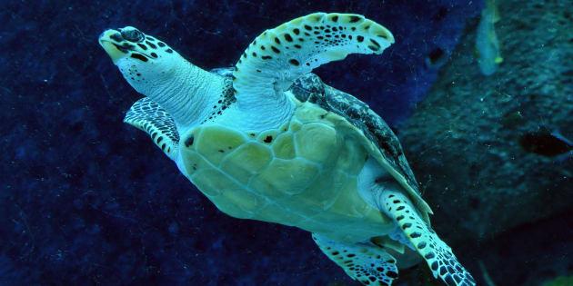 8 enfants morts après avoir mangé une tortue marine — Madagascar