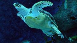 8 enfants meurent après avoir mangé une tortue marine au