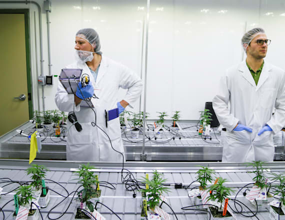 Canadian students learn to grow pot