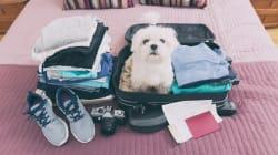 Vacaciones con tu mascota: los 5 mejores lugares para visitar y dónde