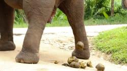 Tous les mammifères font leur grosse commission en 12 secondes