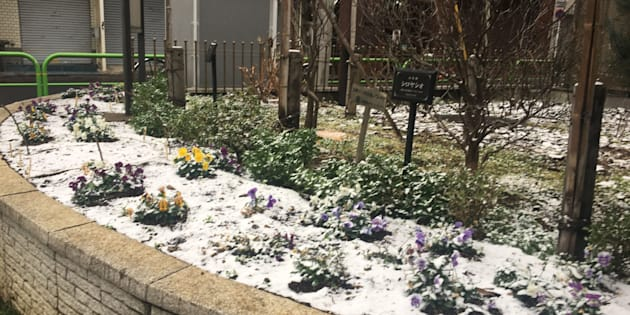 東京都千代田区の公園の花壇に積もった雪
