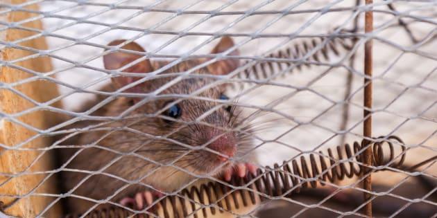En las redes sociales somos como ratones enjaulados.