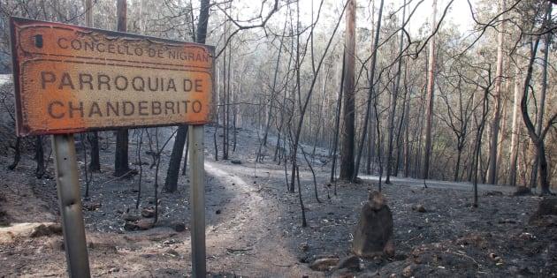 Zonas siniestradas de los montes gallegos, en la aldea de Chandebrito en Nigrín (Pontevedra), donde fallecieron dos de las cuatro víctimas mortales de estos fuegos.