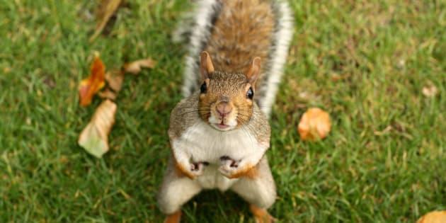 Laissons nos écureuils en paix et repensons notre place dans le cycle de la Nature.