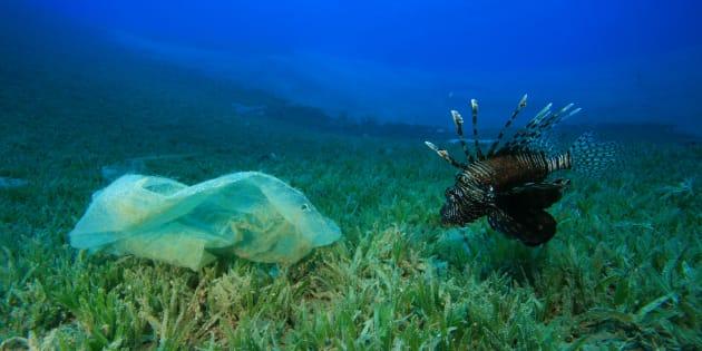 Pollution marine: le nombre de sacs plastiques en baisse grâce aux campagnes de sensibilisation.