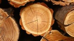 Les producteurs canadiens de bois d'oeuvre restent confiants malgré les