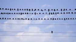 Populismo e solitudine: l'alba del giorno