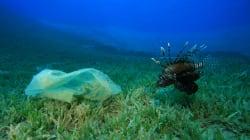 Le nombre de sacs plastiques dans les eaux qui entourent le Royaume-Uni en baisse grâce à la création de
