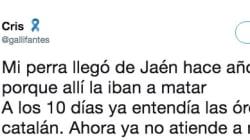 El viral del día en Twitter: cachondeo con la historia del perro de Jaén que aprendió