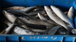 Hélène Darroze, Yannick Alléno... plus de 200 chefs s'engagent contre la pêche