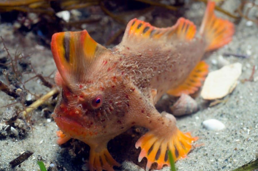 Científicos descubren población de peces con patas