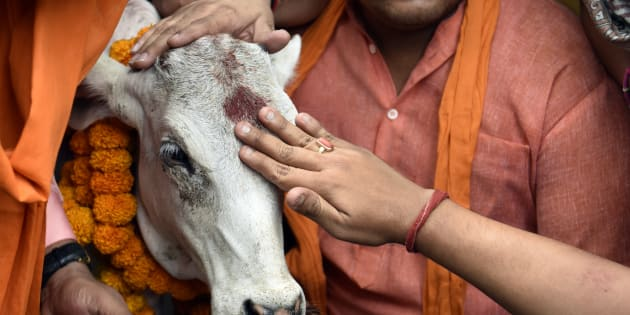 SC stays ban on cow slaughter
